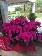 Fotos de Flores del jardín